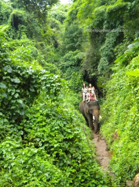 elefante Chiang Mai Qué hacer en Chiang Mai