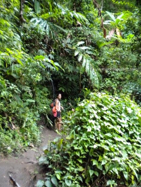 selva Chiang Mai 2 Qué hacer en Chiang Mai