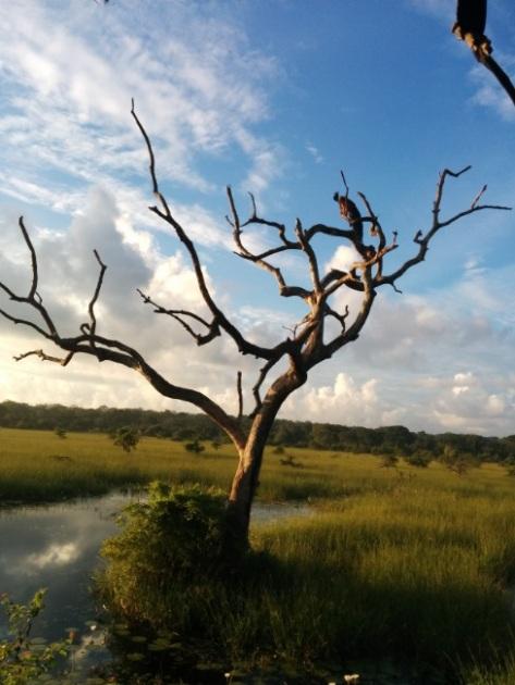 safari Yala aguila